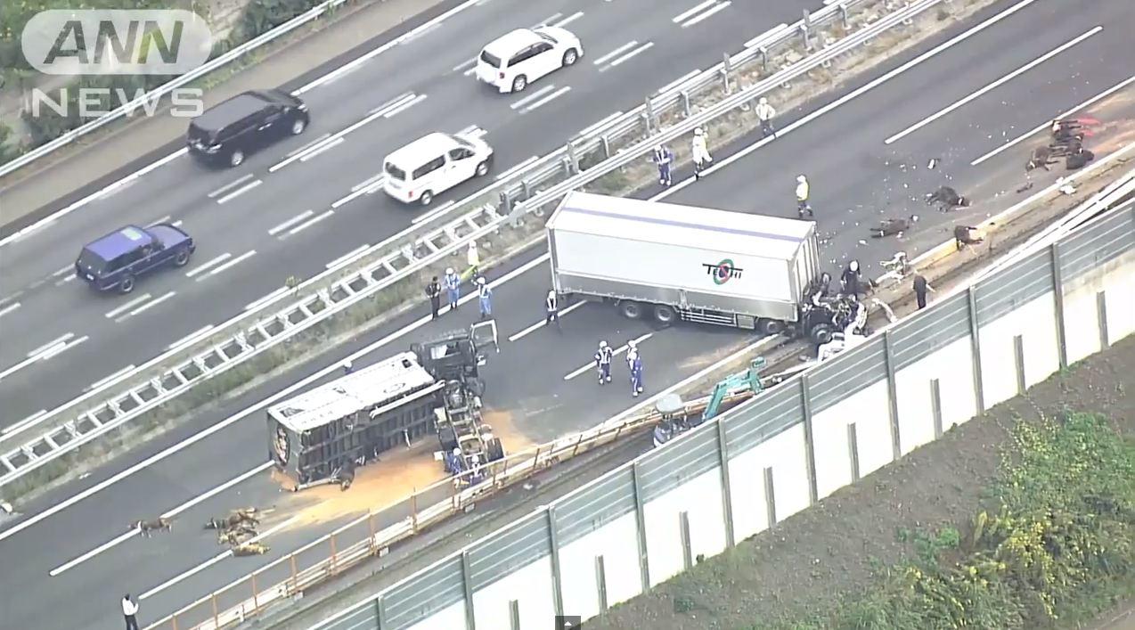 【栃木】トラック2台が衝突 1人死亡 積み荷の和牛が路上に散乱YouTube動画>4本 ->画像>15枚