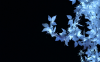 夜の花.jpg