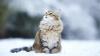 bg_cat.jpg
