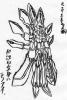 玉藻前(仮).jpg