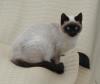 ネコちゃんが群がる写真 007.JPG