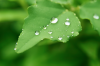 green-leaves_beiz.jp_M02312.jpg